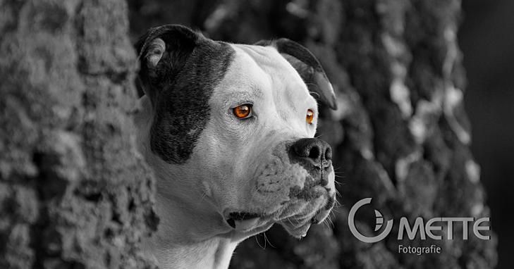 Fotografie, Naturfotografie, Tierfotografie, Haustierfotografie, Gestütsfotografie, Pferdefotografie, Hundefotografie, Gifhorn, Mette, Petra Mette, Naturfotografin, Fotografin, natural photographer, photographer, domestic animal photograph, animal photograph, dog photograph, horse photograph, stud photograph, wildlife photograph, Hundefoto, Hundefotos, Pferdefoto, Pferdefotos, Hundebild, Hundebilder, Pferdebild, Pferdebilder, Welpenfoto, Welpenfotos, Welpenbild, Welpenbilder, Fohlenfoto, Fohlenfotos, Fohlenbild, Fohlenbilder, colt, filly, foal, Gestüt, stud, Afrika, africa, Tiere, animals, Tierfotos, animalphoto, Wüste, desert, Namibwüste, Namib, namib desert, Kalahari, kalahari desert, Pferd, horse, Araber, arabian, arabische Pferde, arabian horse, Vollblutaraber, thoroughbred horse, Landschaft, landscape, Pflanzen, plant, plants, Blume, flower, Katze, cat, Katzenfoto, Katzenfotos, Katzenbild, Katzenbilder