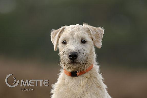 Petra Mette, Natur und Tierfotografie