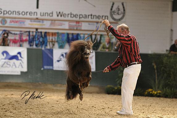 Arabische Pferde in Westfalen / Salzkotten