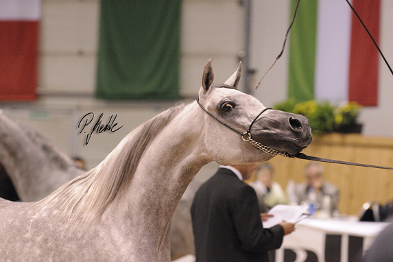 All Nations Cup, Aachen, 2012