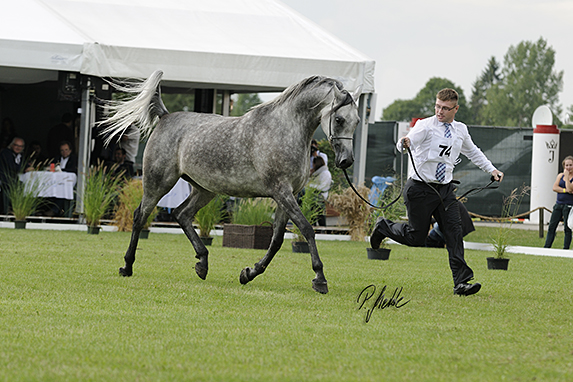 Polish National Arabian Horse Show, Mares 4-6 years old