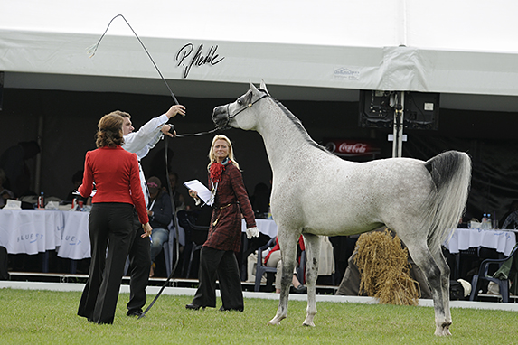 Polish National Arabian Horse Show, Mares 4-6 years old: