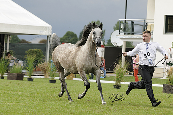 Polish National Arabian Horse Show, Mares 7-10 years old: