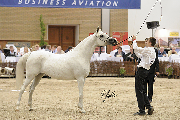 Polish National Arabian Horse Show, Mares 7-10 years old