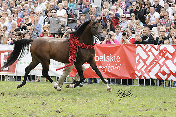 Polish National Arabian Horse Show